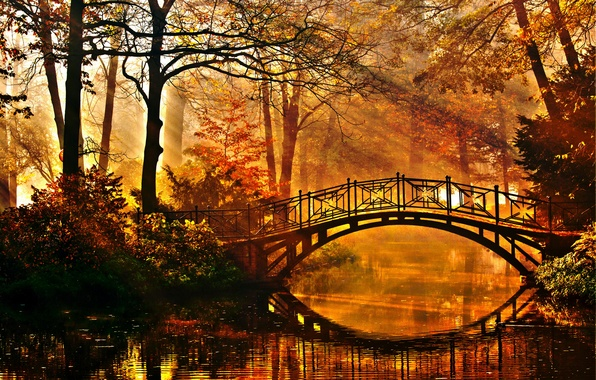 Picture autumn, trees, bridge, pond, Park, the rays of the sun, the bushes