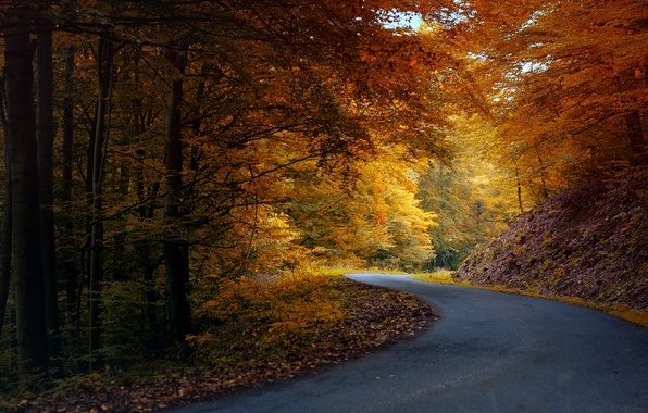 Picture road, autumn, forest, asphalt, leaves, trees, nature, yellow, orange