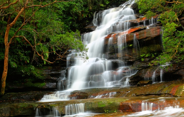 Picture forest, trees, nature, river, stones, waterfall, stream