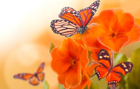 Picture macro, flowers, butterfly, wings, petals, insect