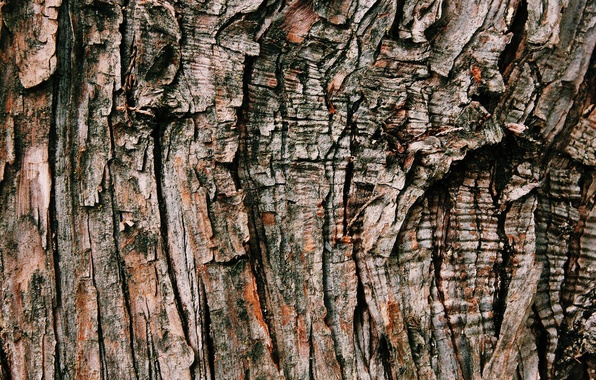 Picture background, tree, texture, bark