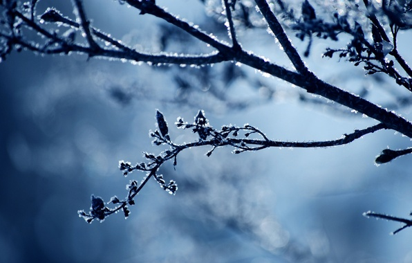 Picture cold, winter, frost, snow, nature, sprig, branch, frost