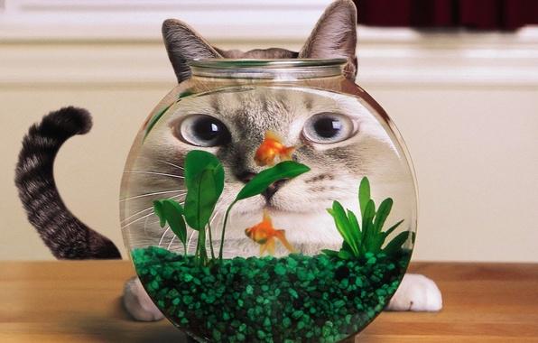 Picture fish, Aquarium, distortion