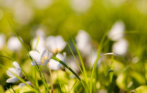 Picture grass, macro, flowers, nature, photo, plants, blur, wallpapers, bokeh