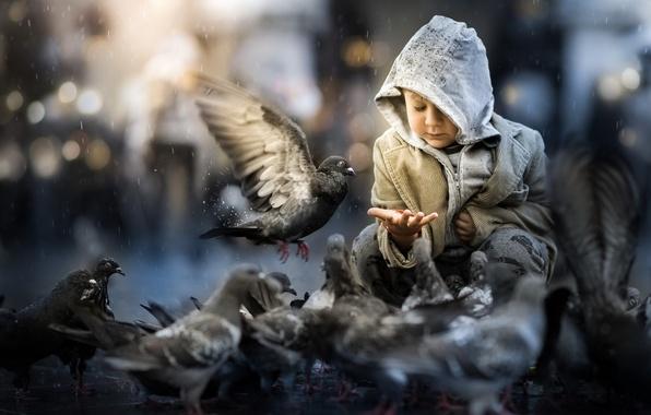Picture birds, street, boy