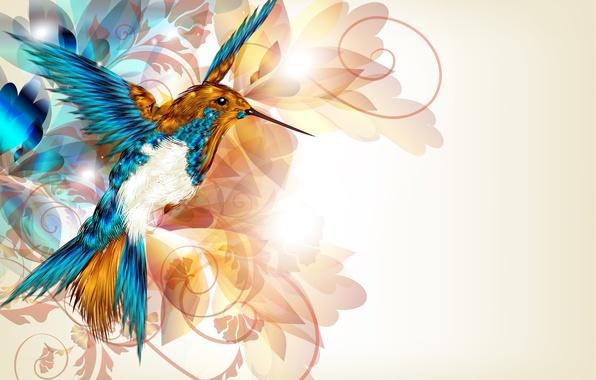 Picture abstraction, wings, vector, beak, Hummingbird, bird