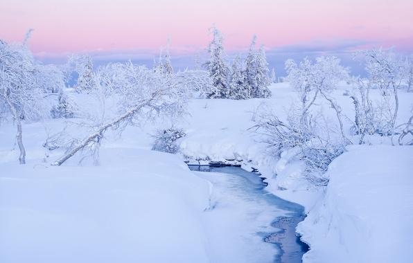 Picture winter, snow, trees, stream