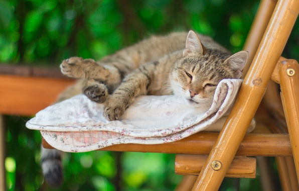 Picture cat, summer, cat, green, grey, background, mood, chair, sleeping, blanket, striped, blurry, laziness, bokeh, legit