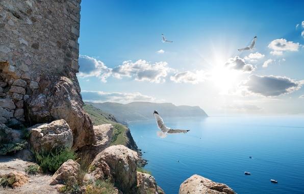 Picture sea, the sky, the sun, clouds, rays, birds, stones, rocks, coast, height, Russia, Crimea