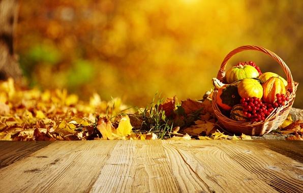Picture autumn, basket, pumpkin, leaves, Rowan
