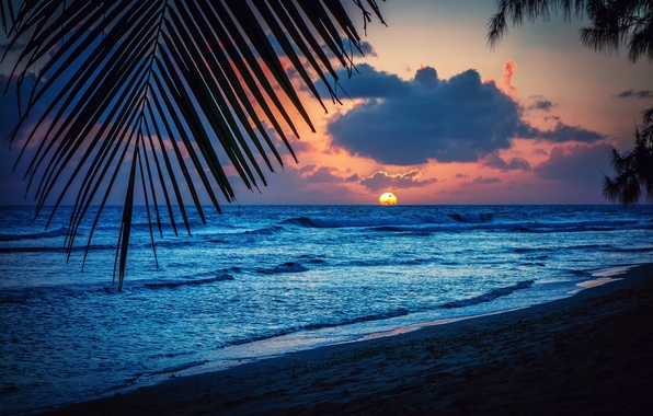 Picture beach, the sun, sunset, sheet, palm trees, the evening, silhouette, Barbados, the Caribbean sea