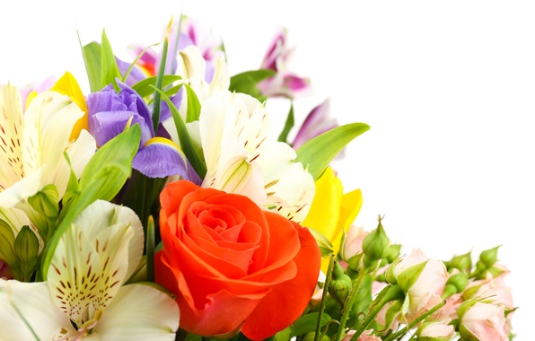 Picture flowers, roses, tulips, white background, irises, white chrysanthemums, Alstroemeria