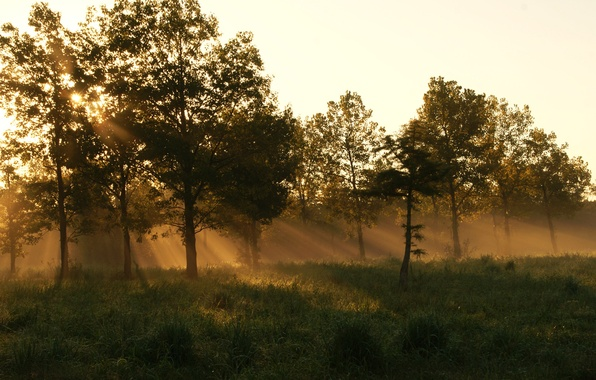 Picture forest, summer, grass, fog, morning
