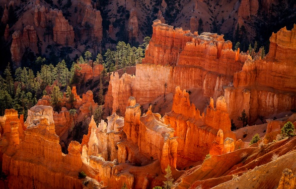 Picture forest, rocks, morning, USA, national Park Bryce Canyon, the geological structure of the Hoodoos, Utah