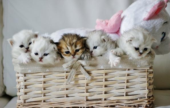 Picture basket, toy, kittens, kids, Teddy bear