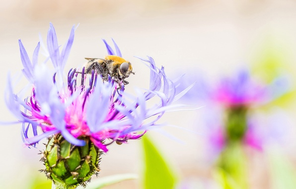 Picture flower, petals, insect, weed