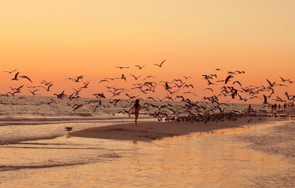 Picture sea, beach, sunset, birds, seagulls, walk