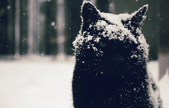 Picture eyes, cat, look, snow, background, Kote, Moody