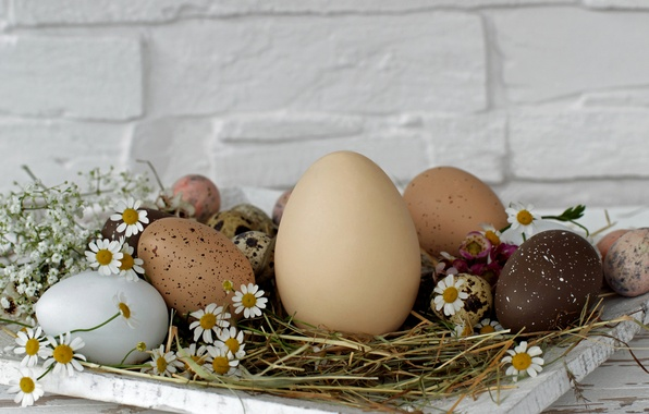 Picture flowers, wall, holiday, eggs, Easter, hay, stand, Easter, eggs, Daisy