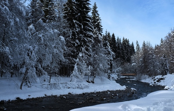 Picture winter, forest, nature, river