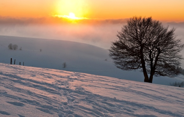 Picture winter, the sun, snow, traces, nature, fog, tree, Wallpaper, blur, wallpaper, widescreen, winter, background, snow, …