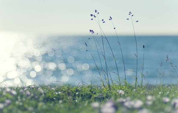 Picture sea, greens, summer, grass, water, the sun, light, nature, green, glare, heat, the wind, lawn, …
