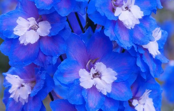 Picture macro, flowers, paint, petals