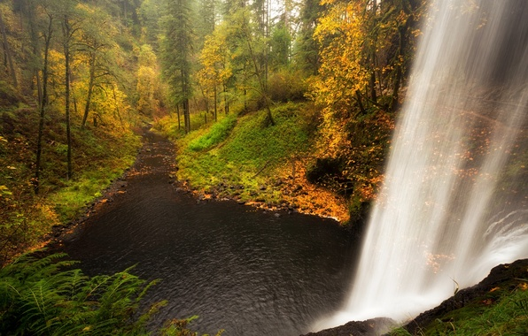 Picture forest, water, trees, landscape, waterfall, Nature, forest, river, trees, landscape, nature, water, autumn, view, scenery, …