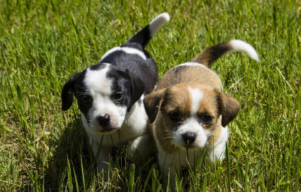 Picture dogs, grass, look, puppies, kids, faces