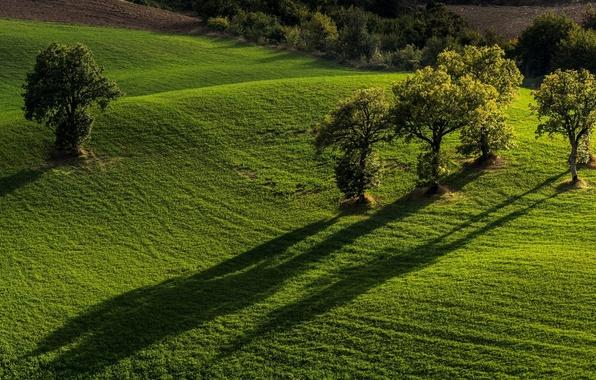 Picture trees, field, Italy, Italy, Marche, Marche, Monti Sibillini National Park, National Park Monti Sibillini, Pievebovigliana, …