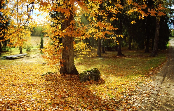 Picture leaves, trees, nature, Park, photo, Autumn, path