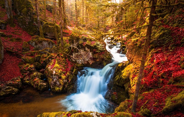 Picture autumn, forest, trees, nature, waterfall