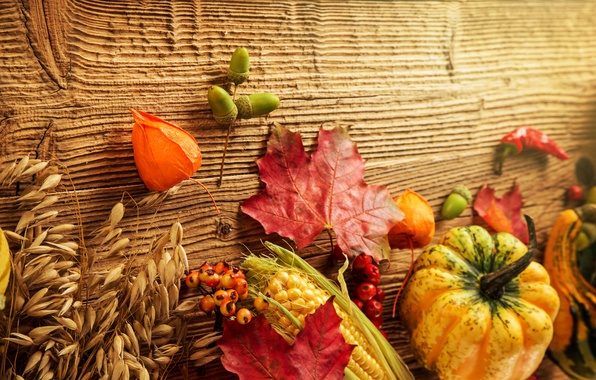 Picture autumn, leaves, berries, tree, corn, harvest, pumpkin, acorns