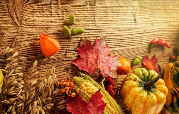 Picture autumn, leaves, berries, tree, corn, harvest, pumpkin, acorns