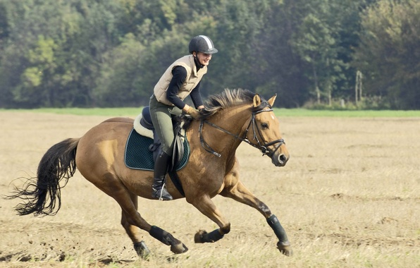 Picture field, girl, horse, rider, running