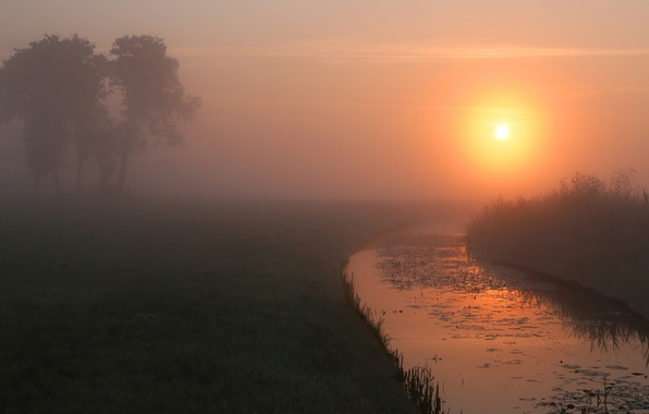 Picture summer, fog, river, dawn, morning