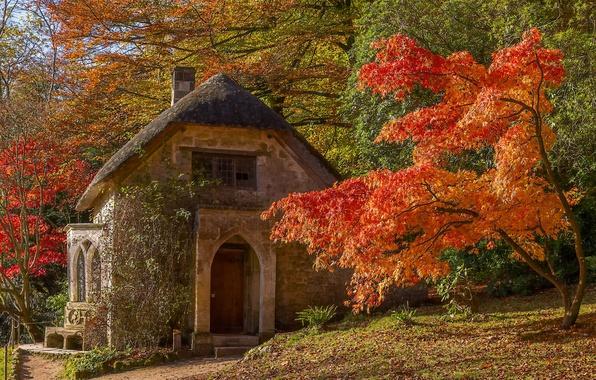 Picture autumn, trees, house, Park, England, maple, Stored, England, Wiltshire, Stourhead Garden, Wiltshire