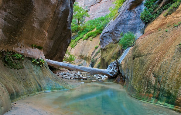 Picture river, stream, stones, tree, rocks, gorge, Zion National Park, Utah, Zion national Park