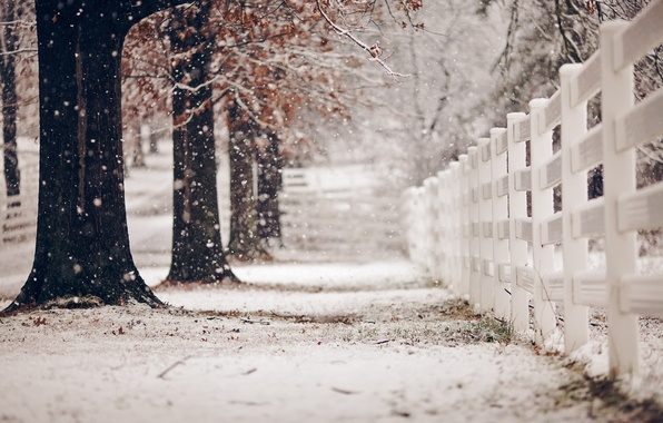 Picture winter, street, the fence