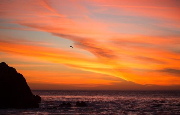 Picture sea, the sky, clouds, sunset, rock, bird