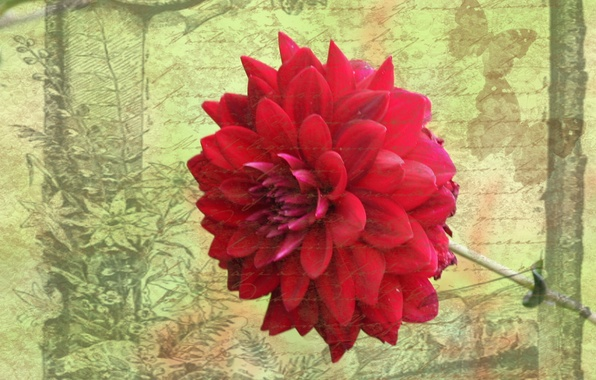 Picture flower, style, background, postcard