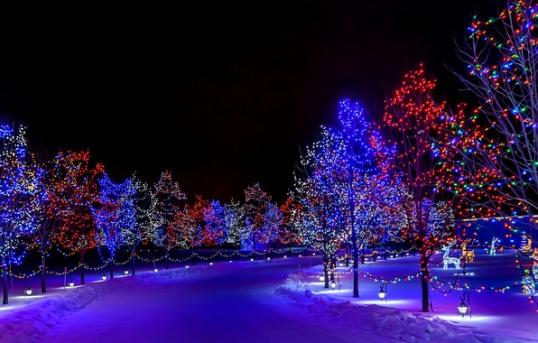 Picture winter, snow, decoration, trees, night, lights, lights, holiday, street, Christmas, Happy New Year, trees, nature, …