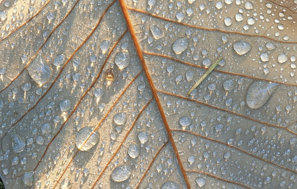 Picture Sheet, Nature, Drops