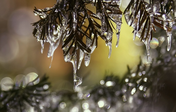 Picture macro, needles, branches, ice, icicles