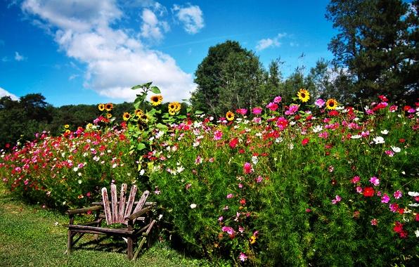 Picture grass, trees, flowers, sunflower, garden, chair, the bushes, kosmeya