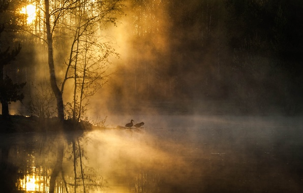 Picture forest, trees, birds, fog, river, dawn, morning