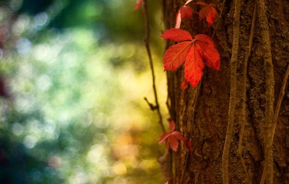 Picture macro, red, sheet, glare, tree, trunk, bark, bokeh
