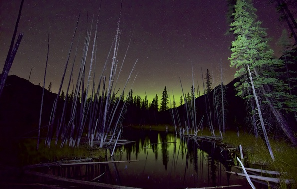 Picture forest, the sky, trees, Northern lights, swamp, night star