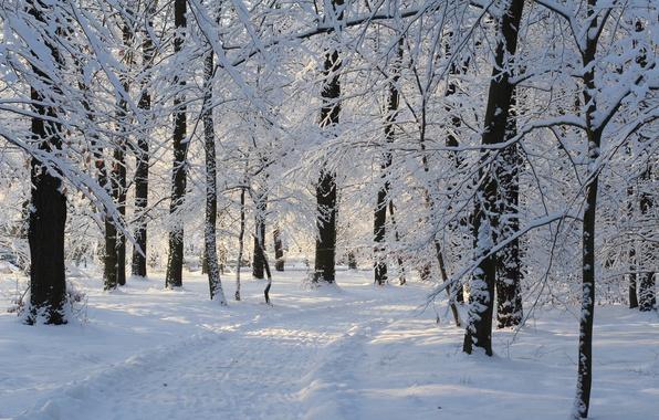 Picture Winter, Snow, Park, Track, Winter, Park, Snow, Trees, Path