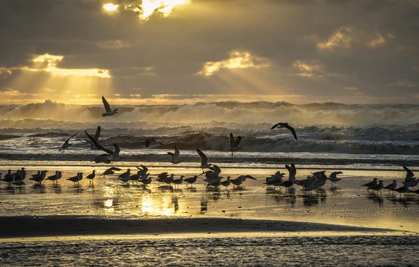 Picture sea, wave, beach, the sky, rays, light, birds, shore, seagulls
